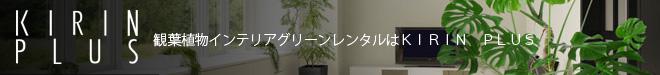 観葉植物インテリア・グリーンレンタルはKIRIN PLUS