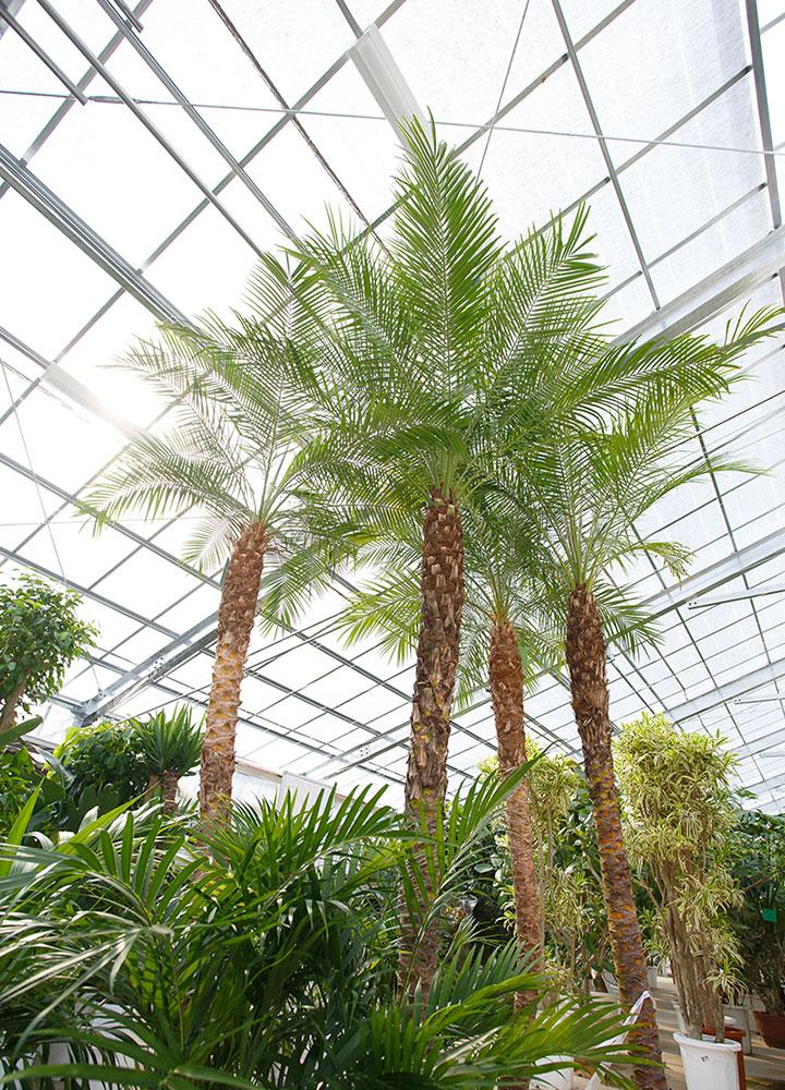 自社温室での植物の管理