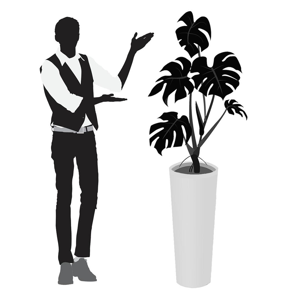 観葉植物レンタルTall Mサイズ