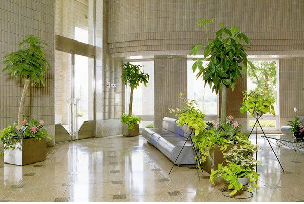 観葉植物の設置でコンサートホールエントランスが華やかな癒し空間に一変