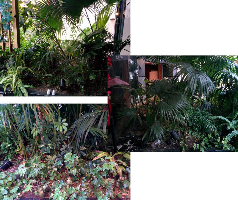 観葉植物を設置した店舗の入口