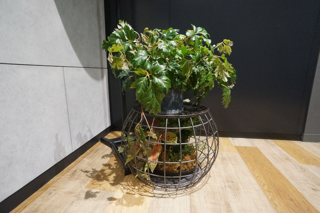 行燈の下の植物1