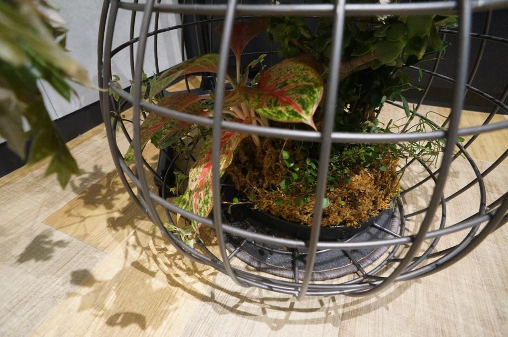 行燈の下の植物2