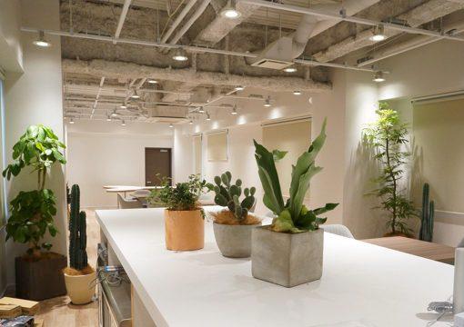 個性豊かなグリーンでグローバルなIT企業オフィスを演出