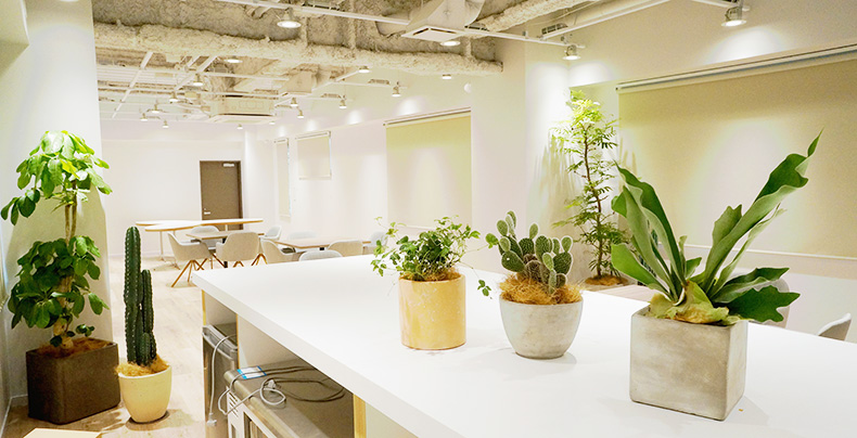 オフィスをはじめ店舗やカフェなど様々なシーンをグリーンで彩ります