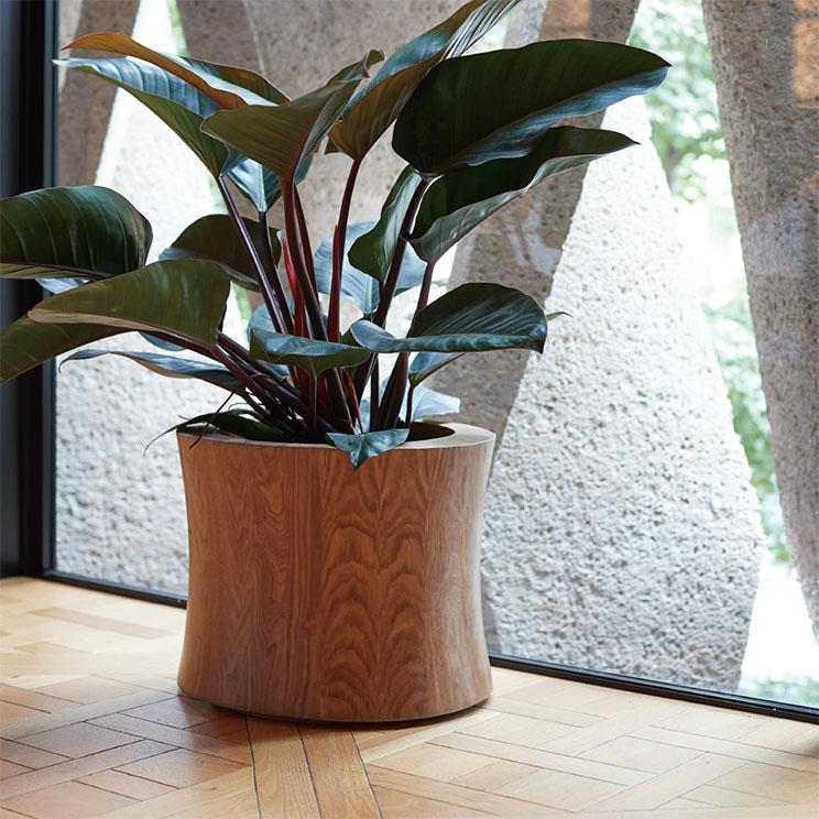 Each material|天然木の緩やかな曲線